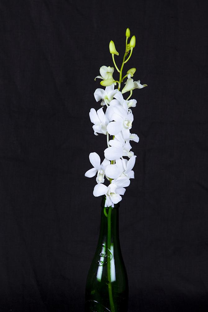 flowerphotoday-4579LR.jpg