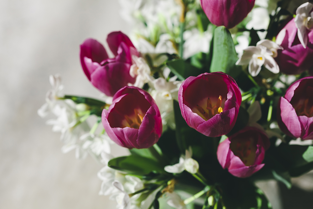 Jessica Currier Tulips