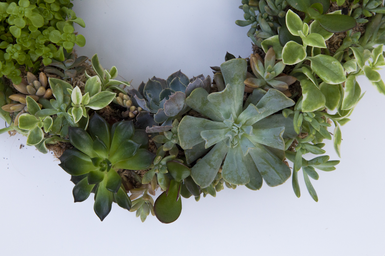 succulent-wreath-diy11