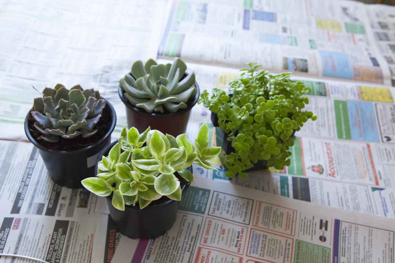 succulent-plants-potted