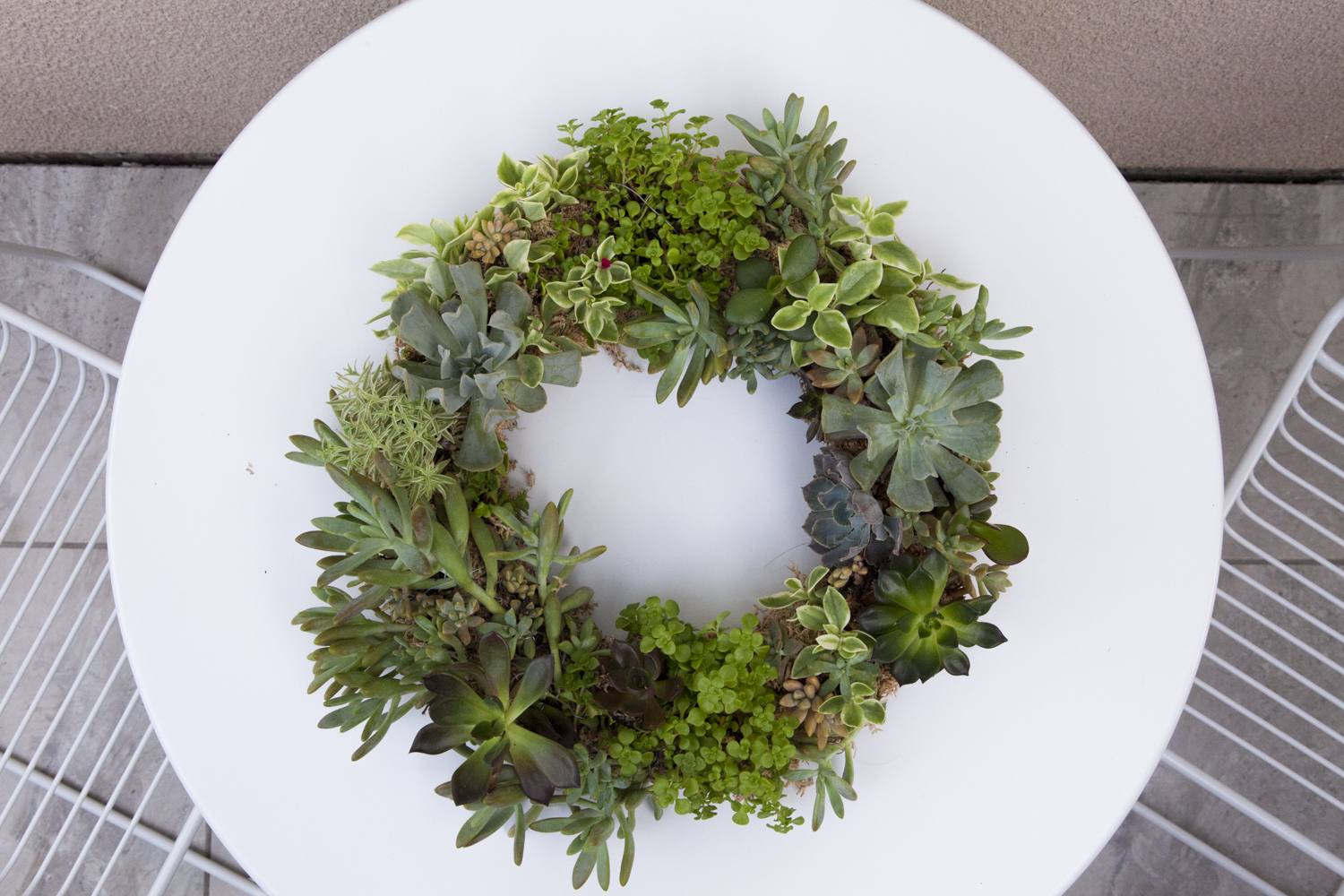 Succulent Wreath DIY - Read More...