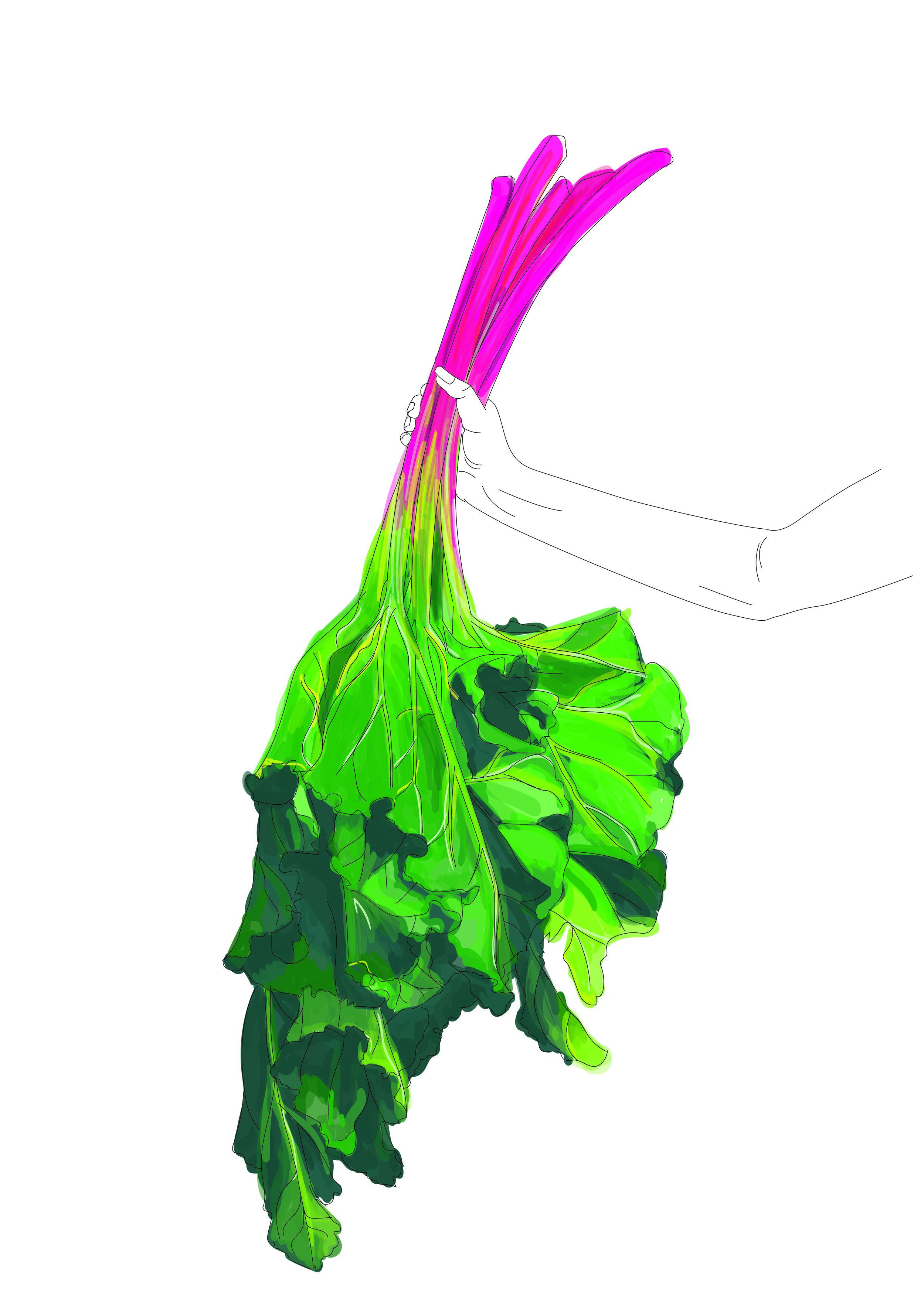 Vector Illustration 1-01.jpg