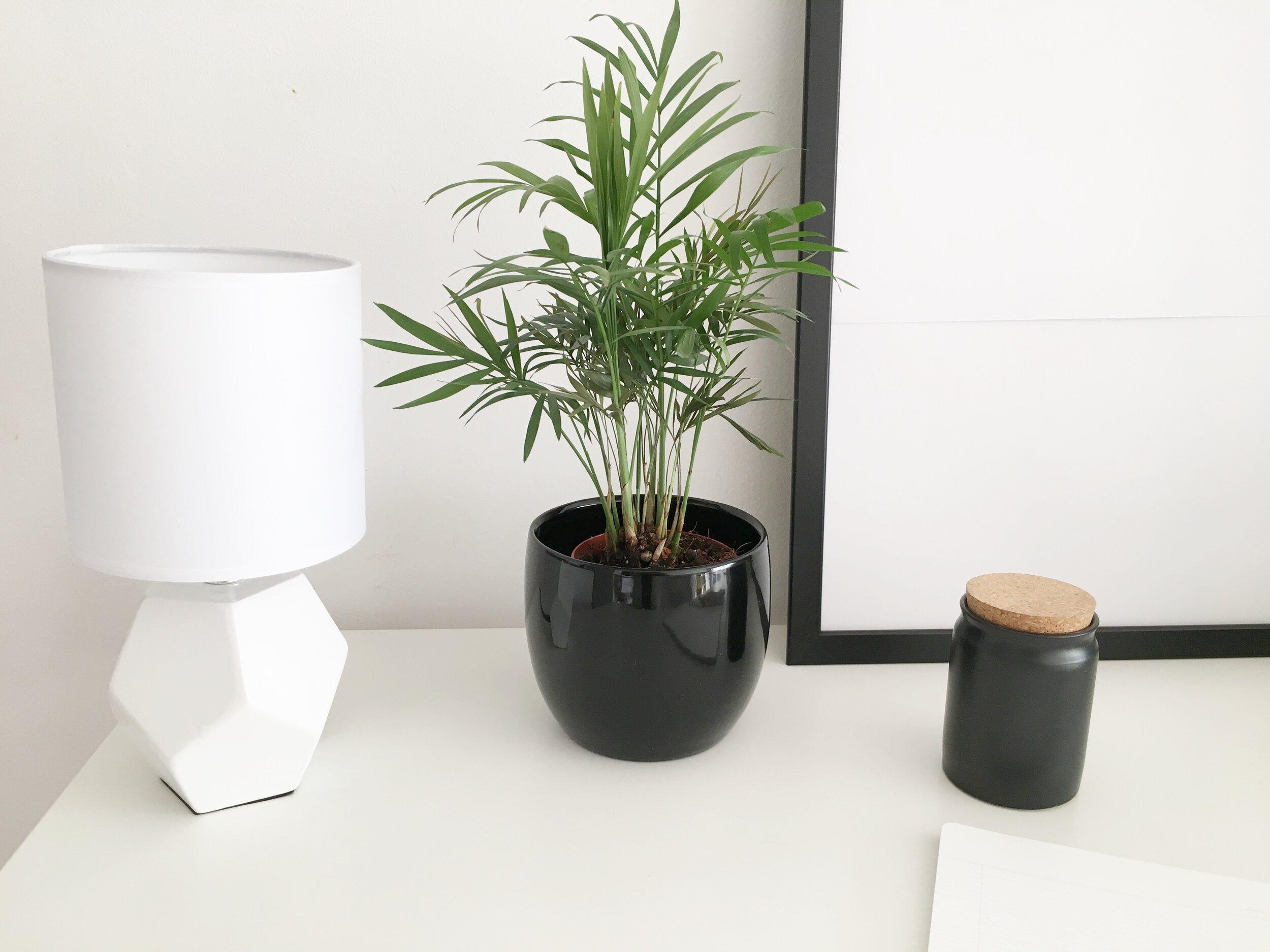 Lampka stołowa, doniczka, roślina doniczkowa, kamionkowy pojemnik z korkiem:  Bricomarche