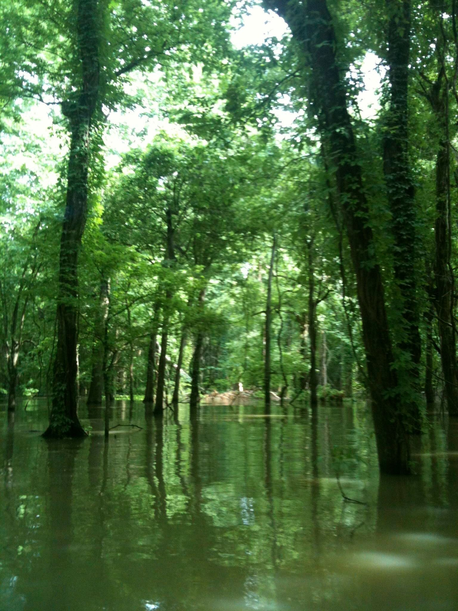 During high water season, water floods the trees and you enter what seems like a secret, underwater forest. You canoe around the trees. Yes, it's as magical as it sounds.