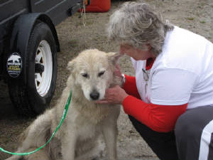 OUR JOURNAL: MILE 26 — MOOSONEE PUPPY RESCUE