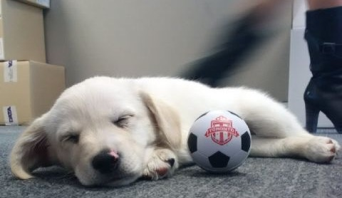Gracie asleep at Men's Professional Soccer Team offices