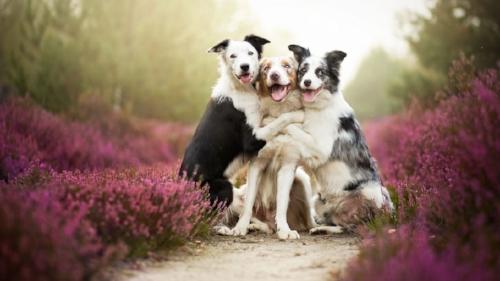 dog image 1.jpg