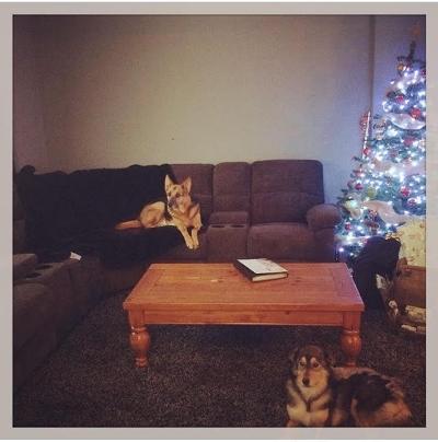 Foy first Christmas.jpg