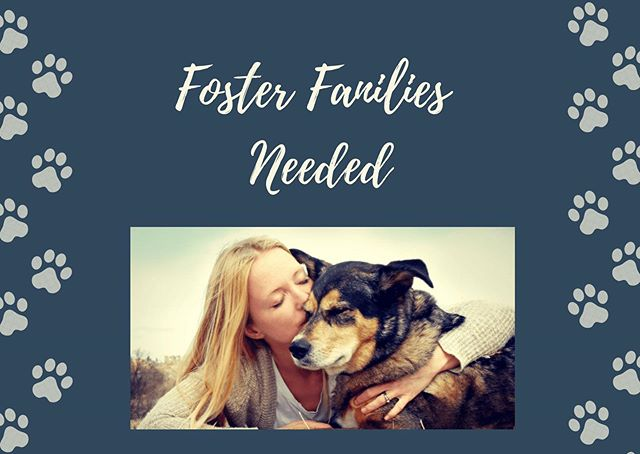 Do you have what it takes to be a foster parent? It is the same commitment as owning your own animal (but not for the same length of time and money). We expect a lot from our foster families but the reward is greater than anything. With having a rescue that is home base, we rely on amazing people to take rescued dogs into their home until we find their furever homes.  We'd love to hear from you if you think you have what it takes.  Head to our website for the first part of the process - application. Those that move on in the process will be contacted. ❤️🐾 #moosoneepuppyrescue #fosterfamily #fosterparents #rescuedismyfavoritebreed #adoptdontshop #northerndog #secondchances