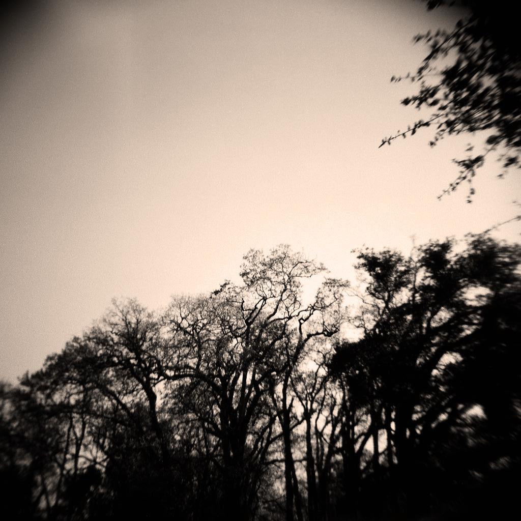 Into the Twilight
