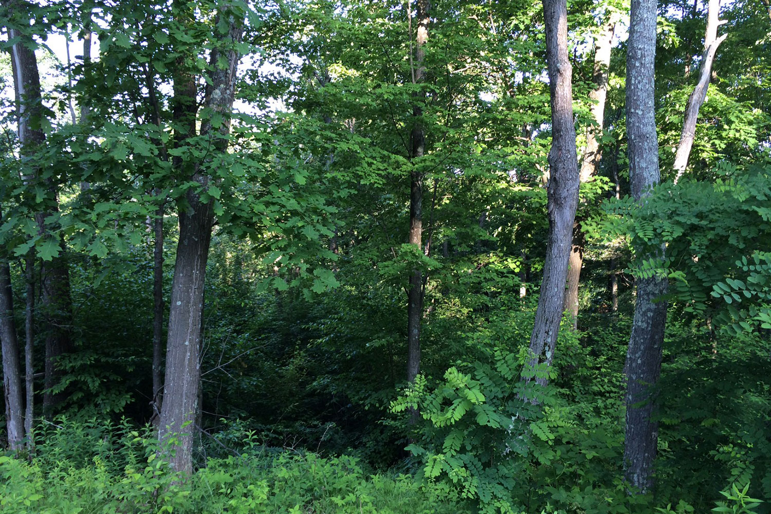 Ridgeview Valley - Lot 95