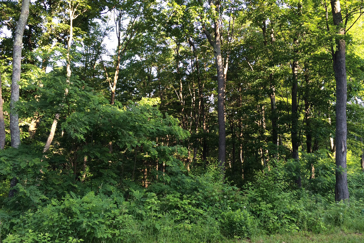 Ridgeview Valley - Lot 96