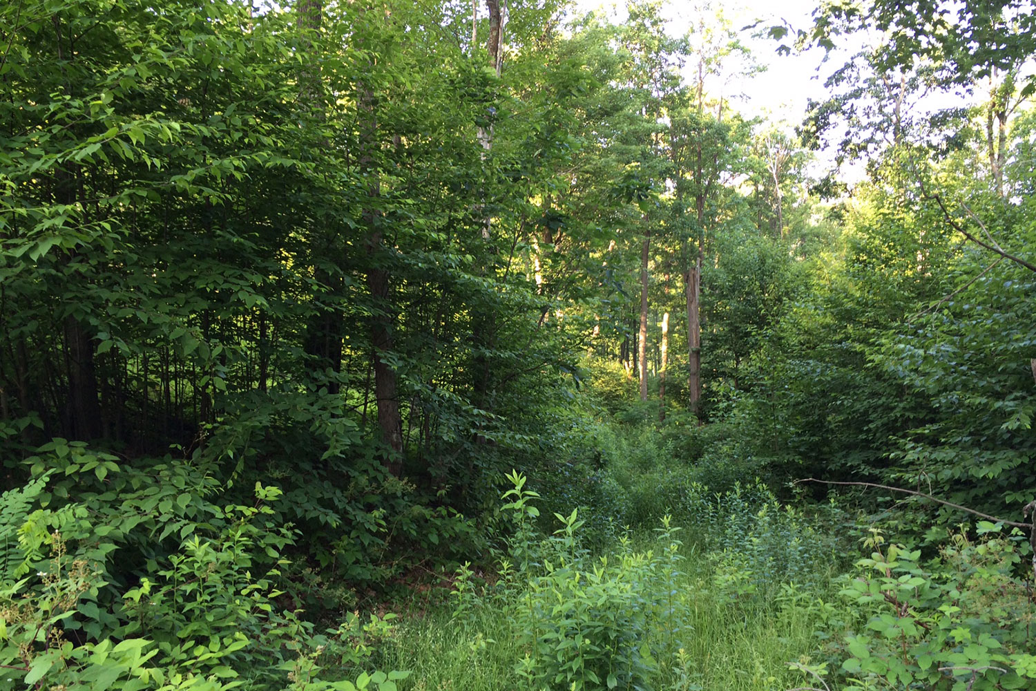 Ridgeview Valley - Lot 97
