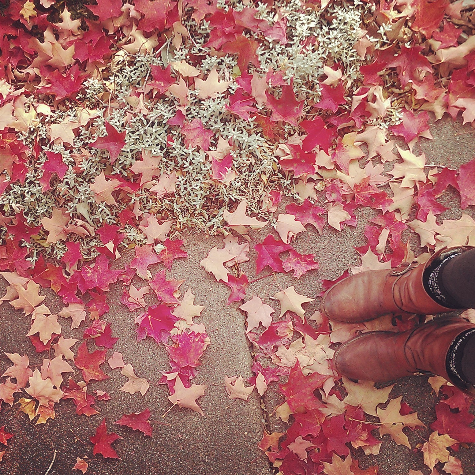 My boots in the red maple leaves