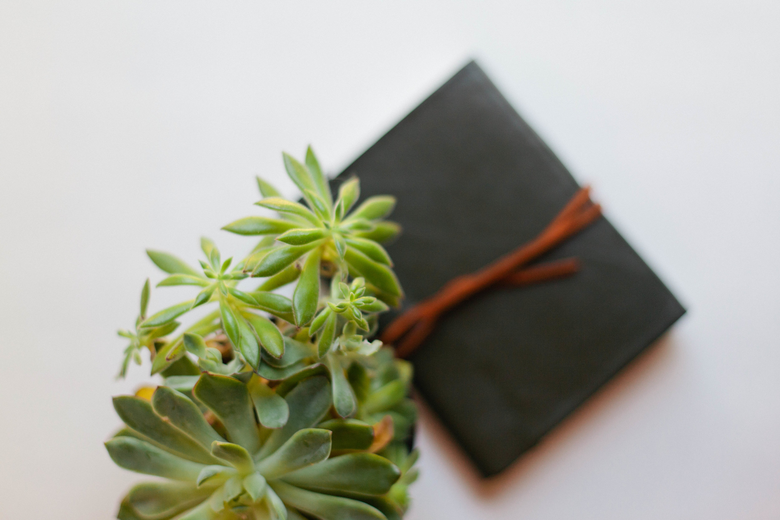 succulents and journal