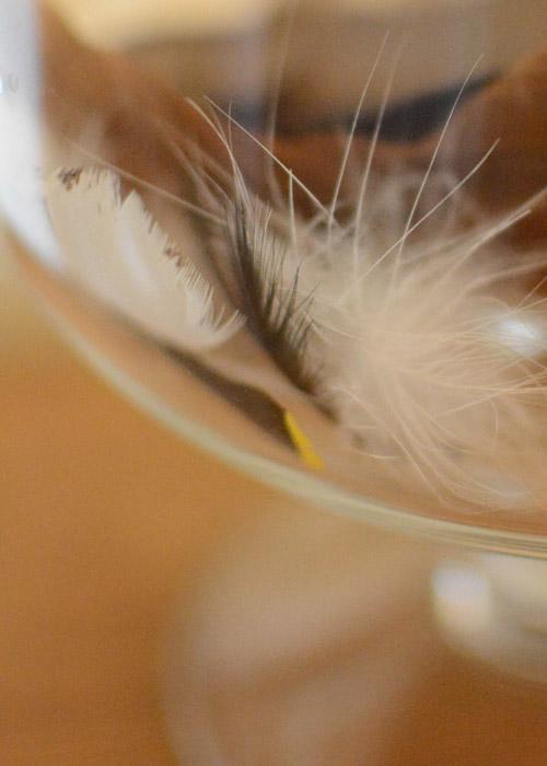 WILD BIRD FEATHER COLLECTION
