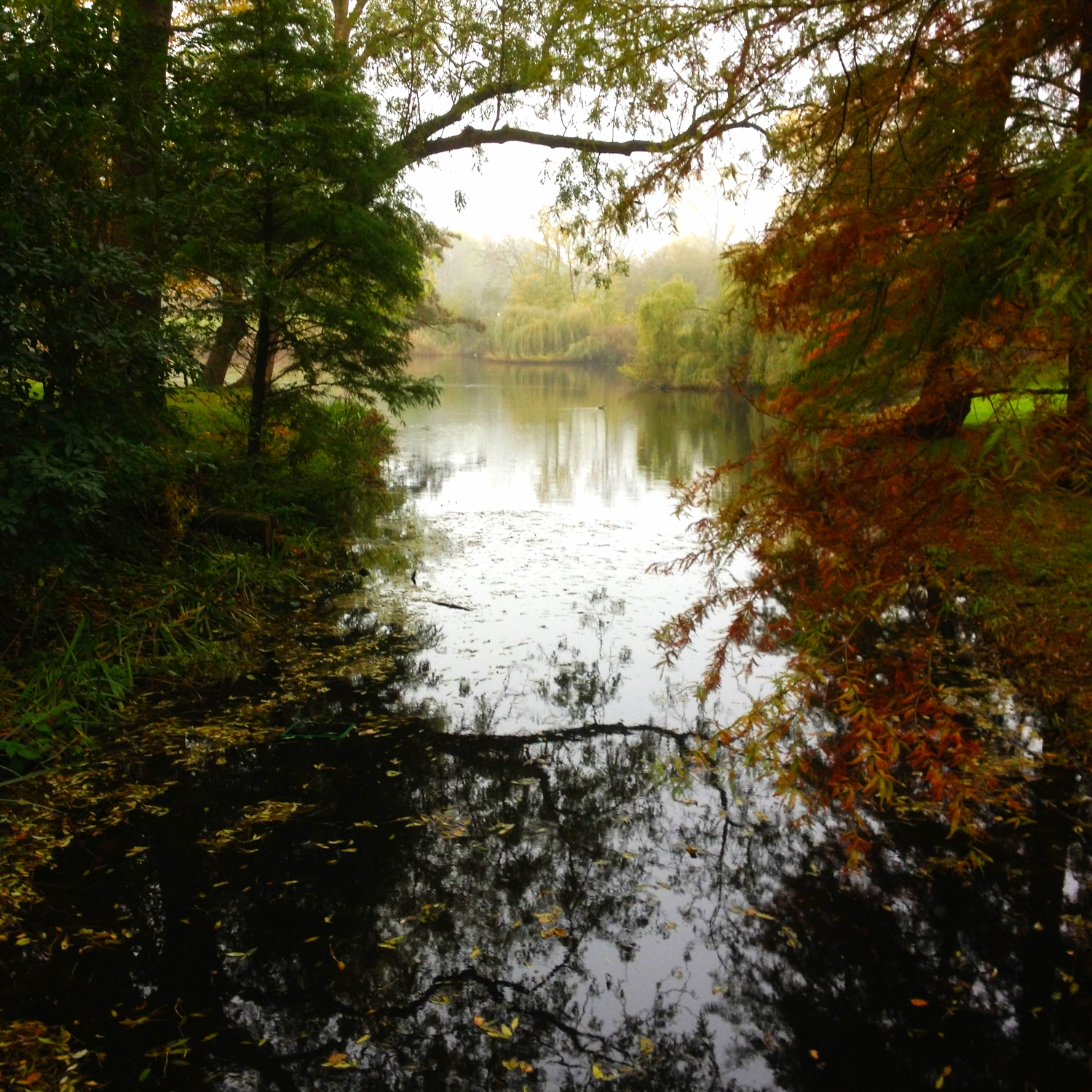 View of the lake, Vondelpark series 2014