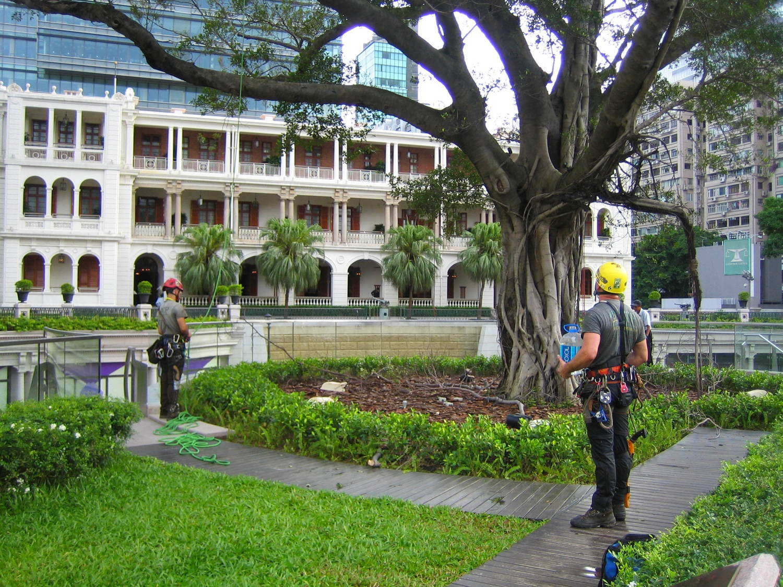 Tree preservation in Hong Kong
