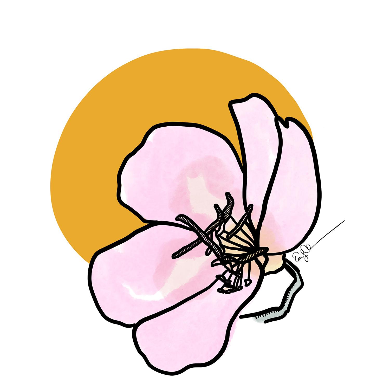 Lil' Pink Flower.jpg