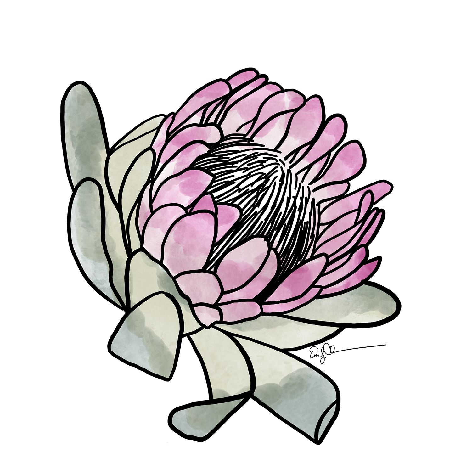 Protea (Pink and Sage).jpg