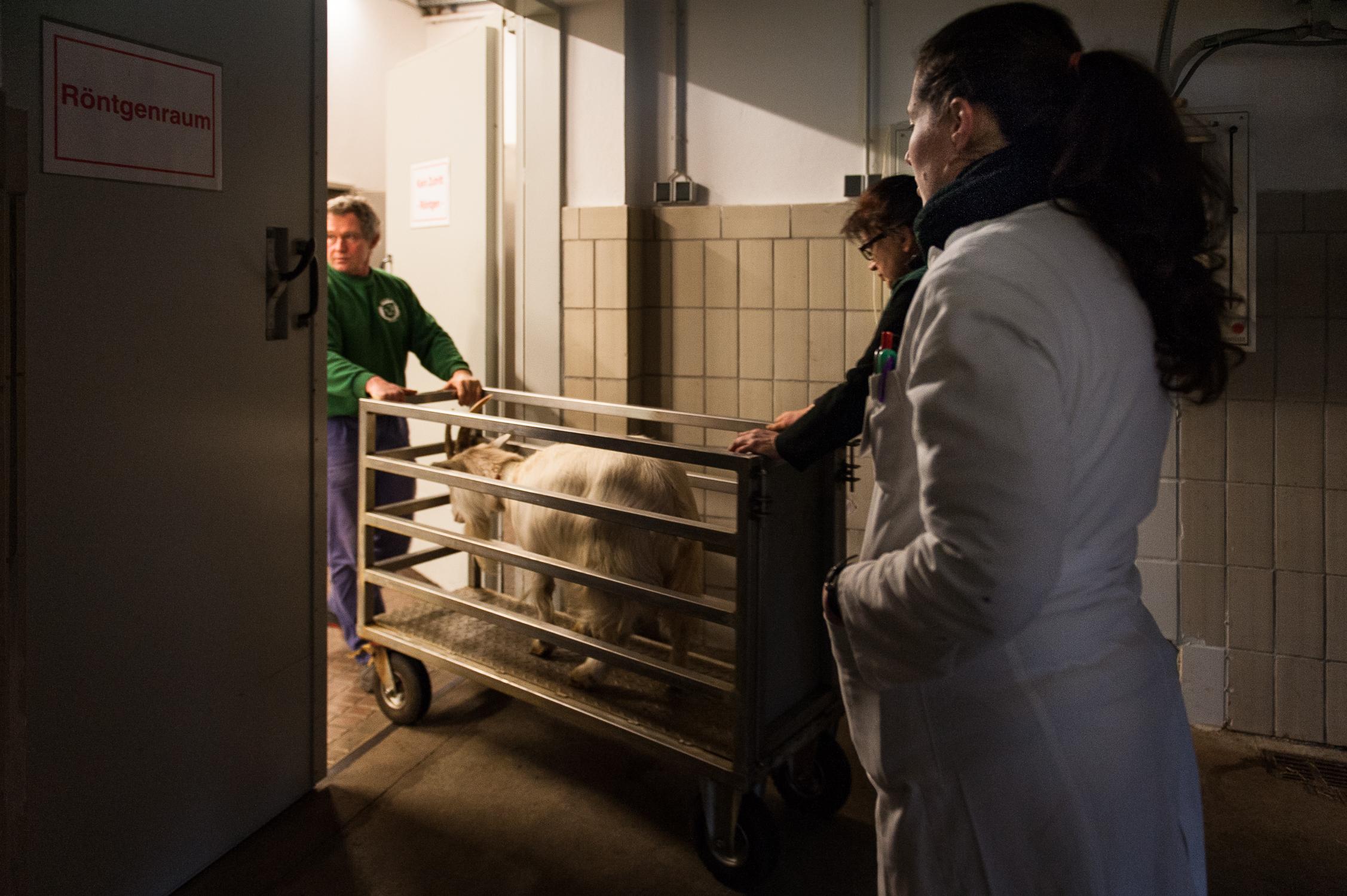 201303 Goat Hospital 14.jpg