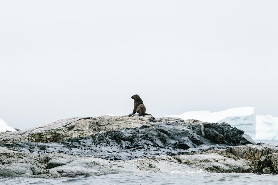 antarctica049.jpg