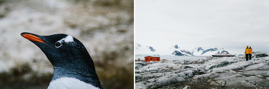 antarctica056.jpg