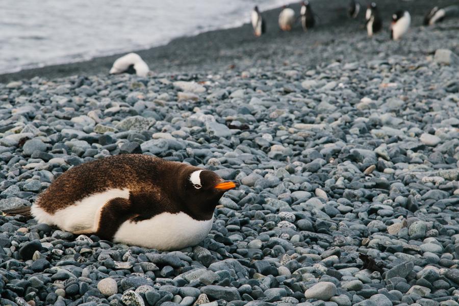 antarctica158.jpg