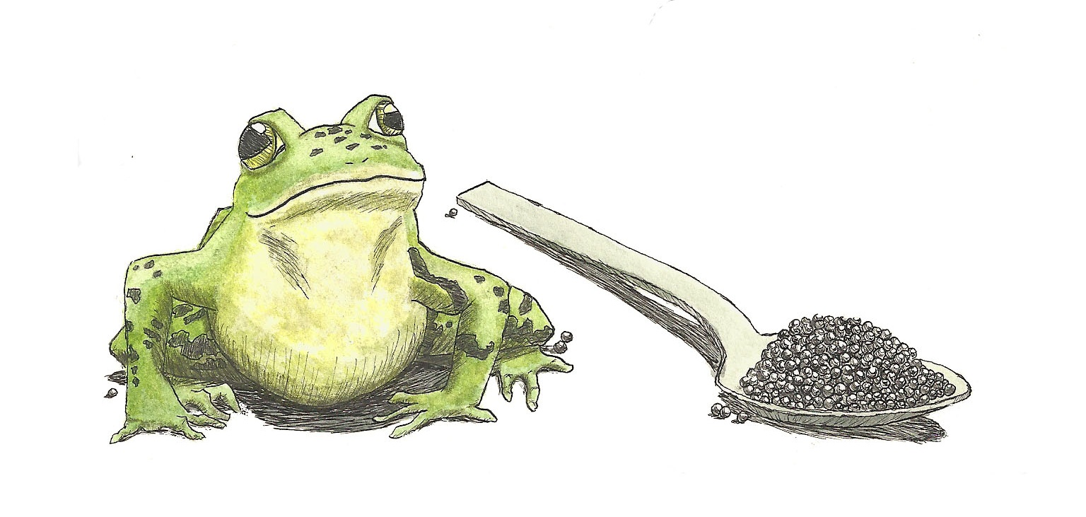 "Celebrated Jumping Frog, 2018, 6 ""x 4"" illustration on watercolor paper using watercolor paint, ink, and colored pencils.  This illustration was created for the cover of an E-Book for the application Books That Grow."