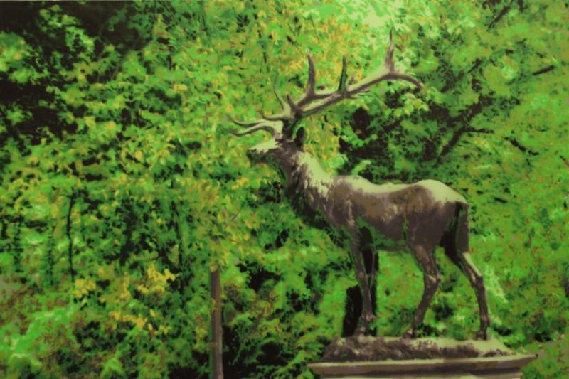 Elk in the Park
