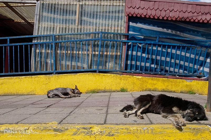 dana-siles-photography-personal-work-chile-12.jpg