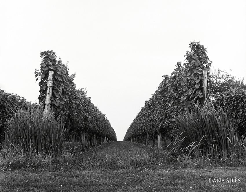 Carolyns-Sakonnet-Vineyard-Dana-Siles-02