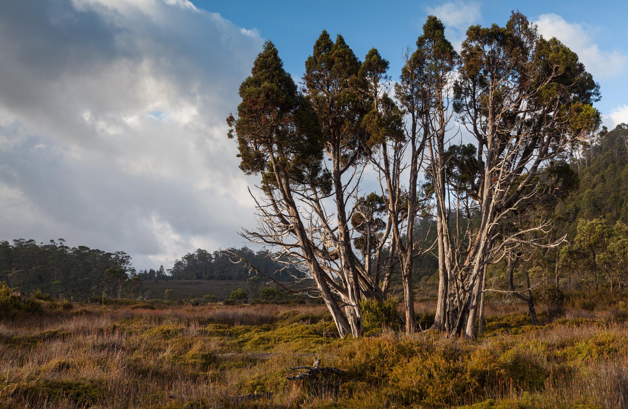 Tasmania_2015_102_2000PX.jpg