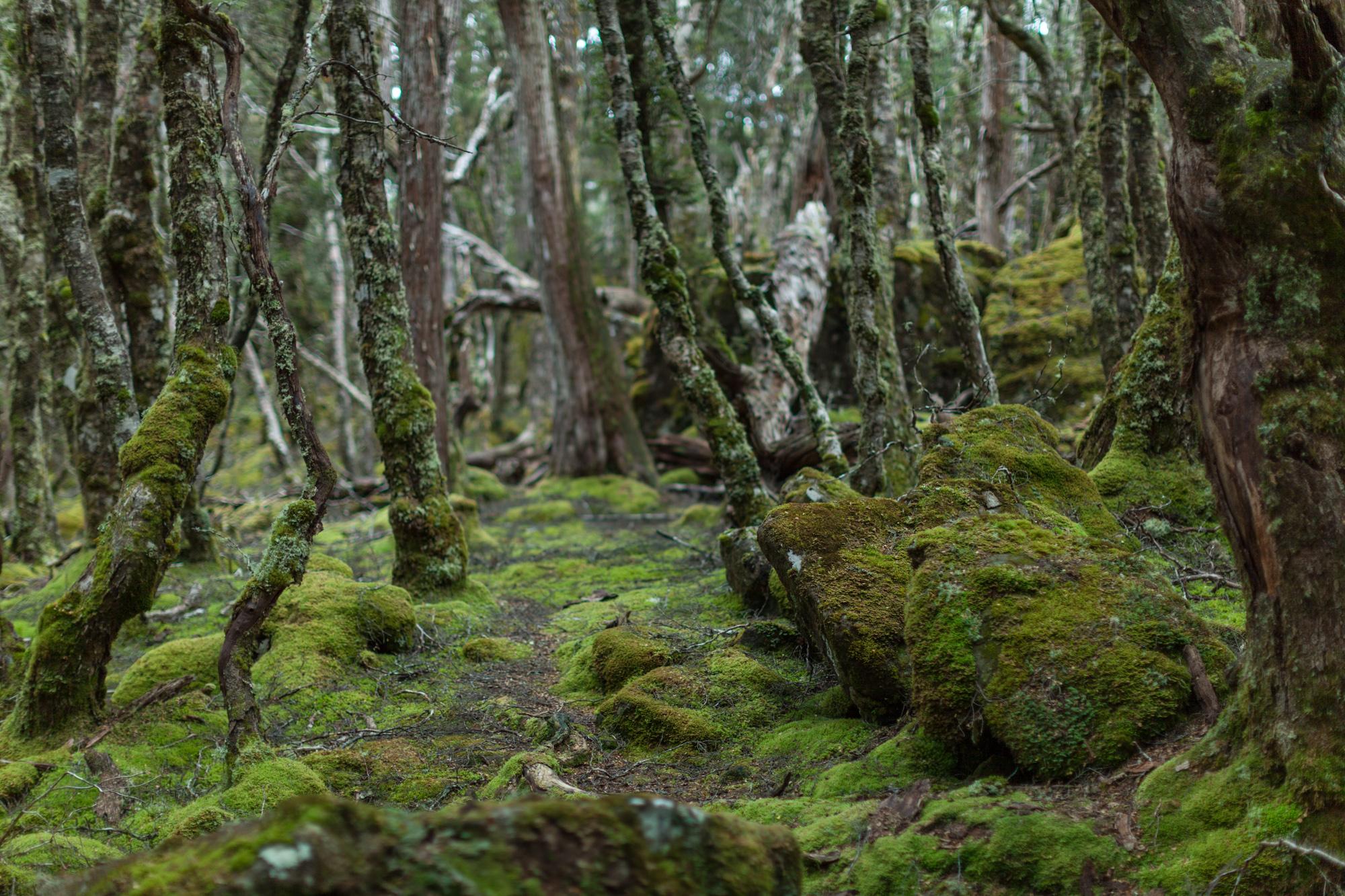 Tasmania_2015_132_2000PX.jpg