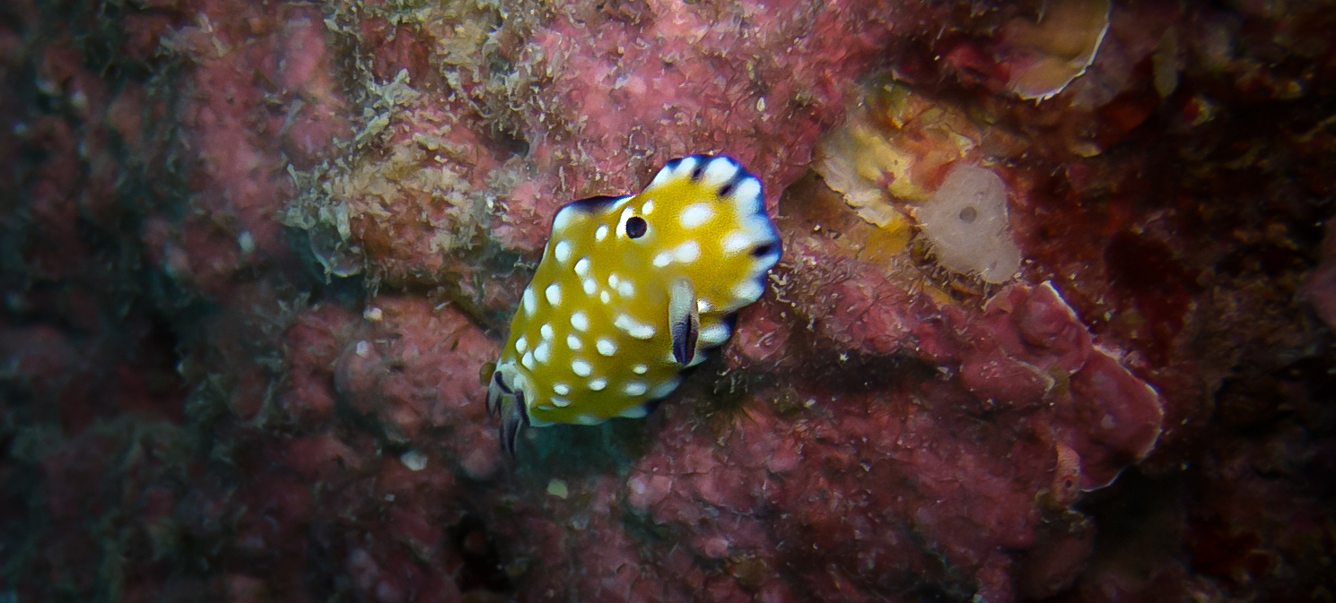 Trembling Nudibranch_20131013(Crop).jpg