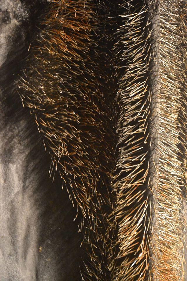 Fur (detail)