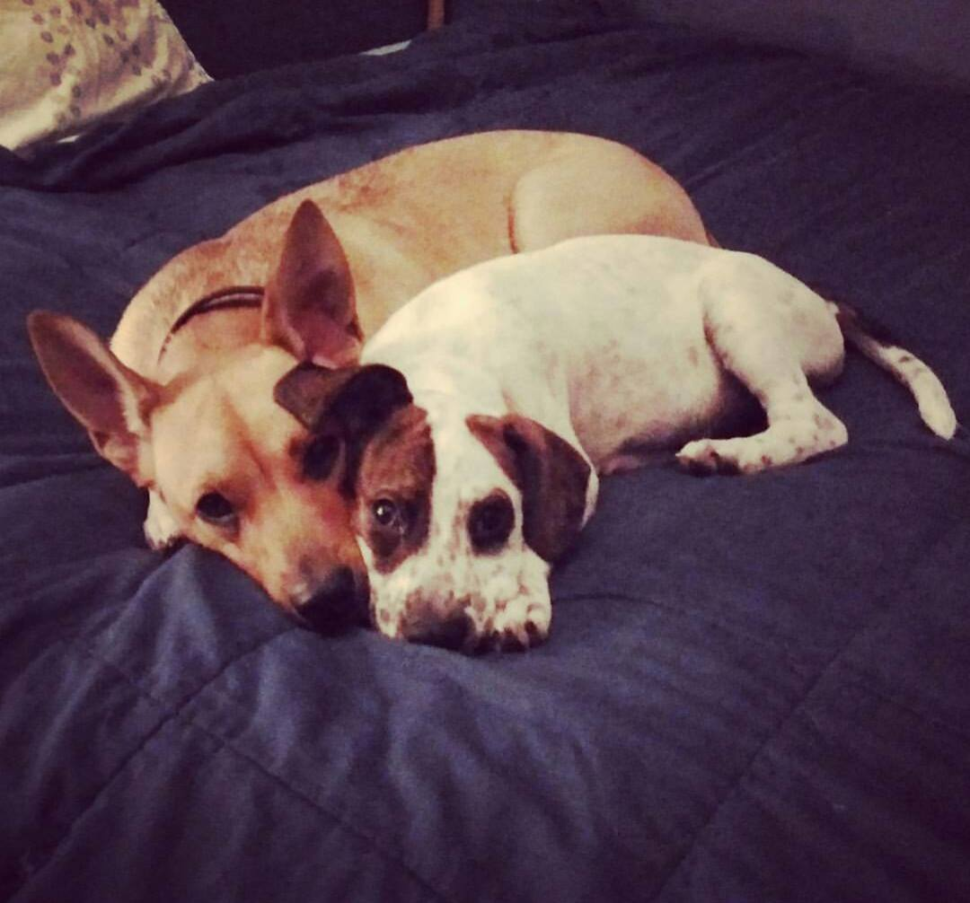 from left to right, Zoey and Scout. (Potato Quality stolen from instagram)