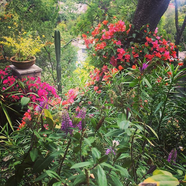 I love #mexicangardens such beautiful flowers!