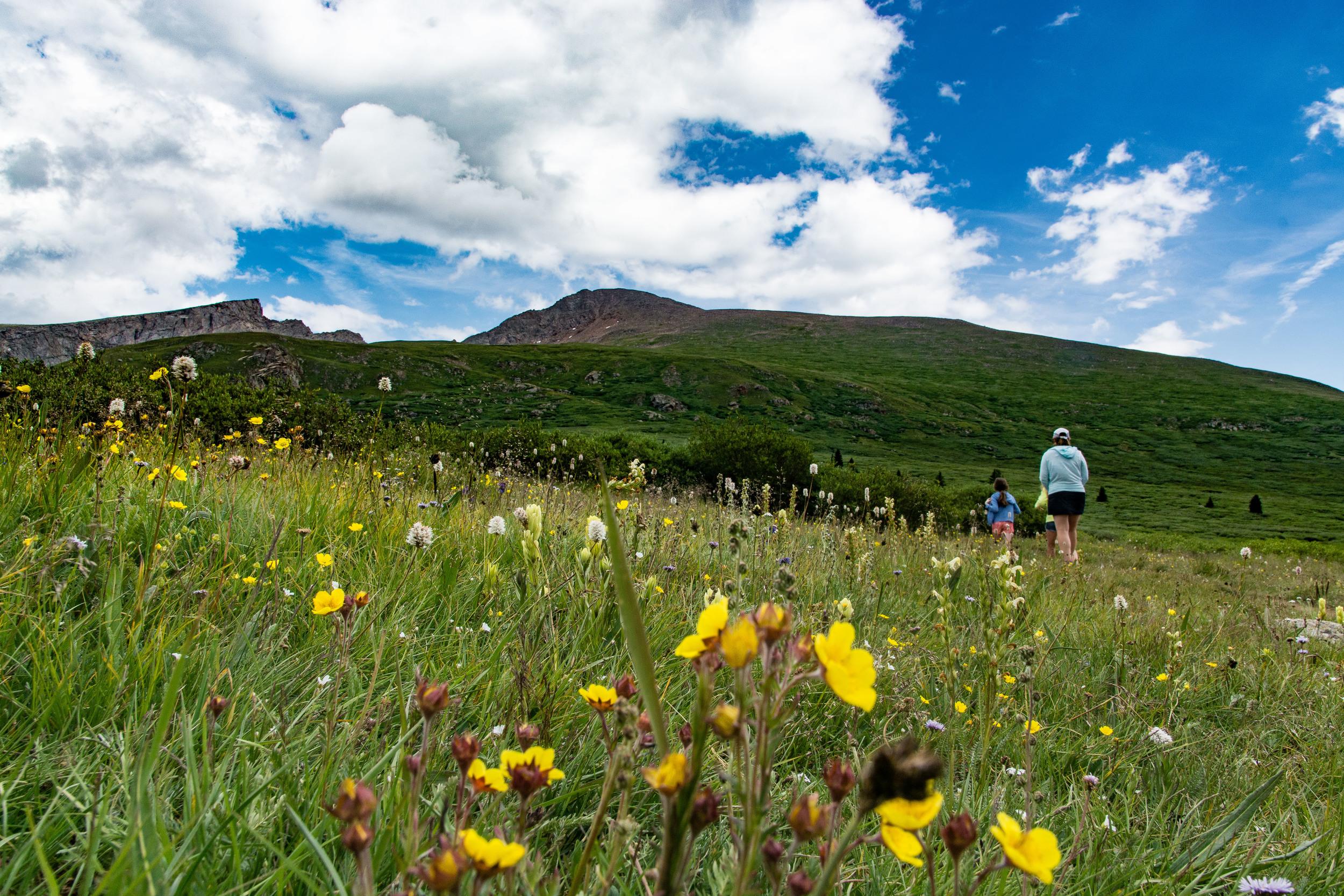 Hearty Alpine wildflowers EVERYWHERE!