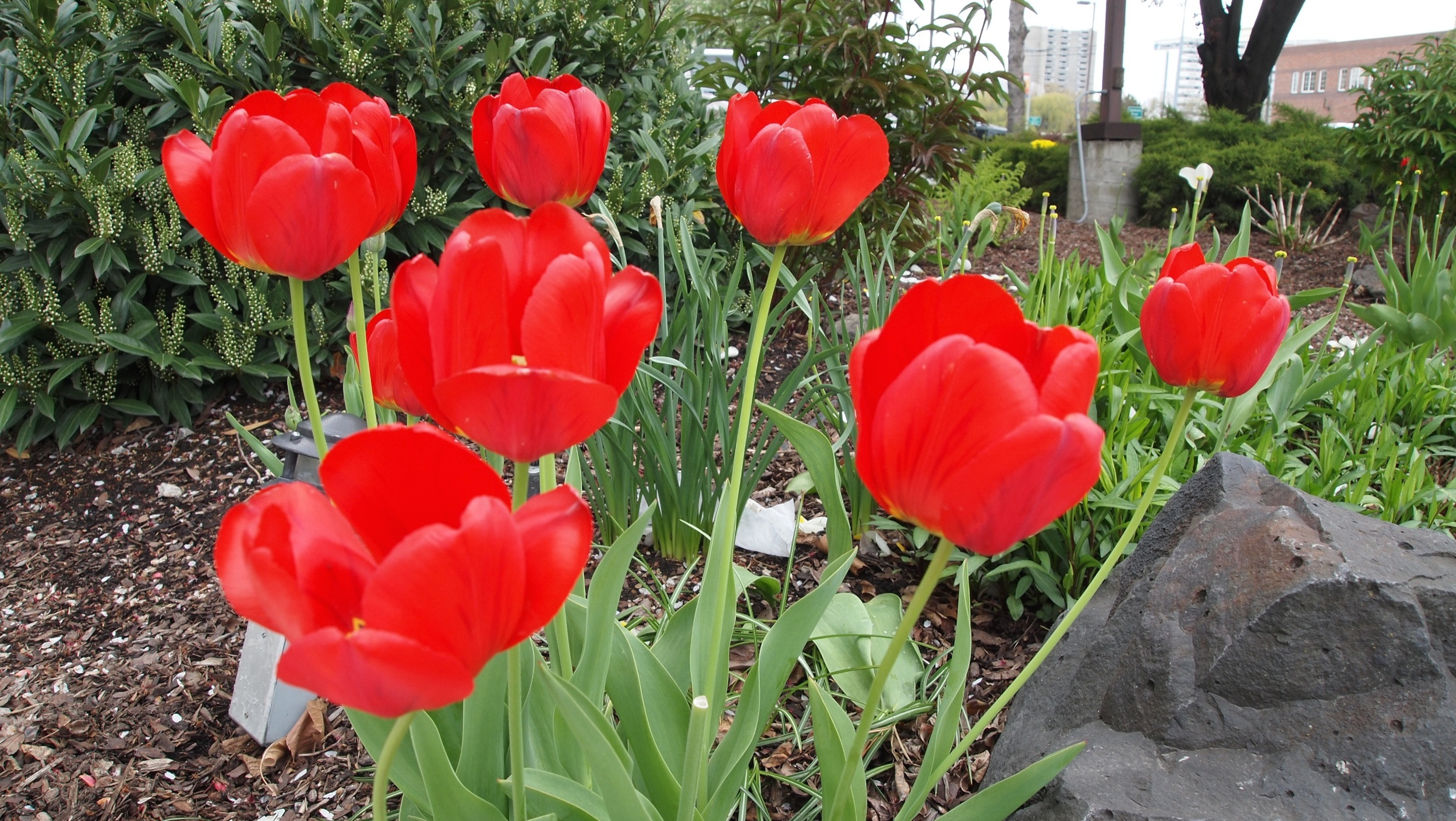 Bloomsday 44.jpg