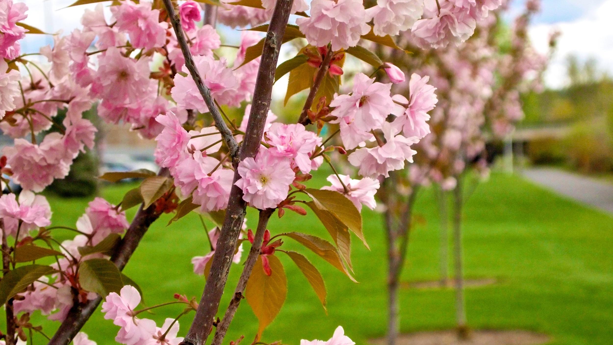 Bloomsday 47.jpg