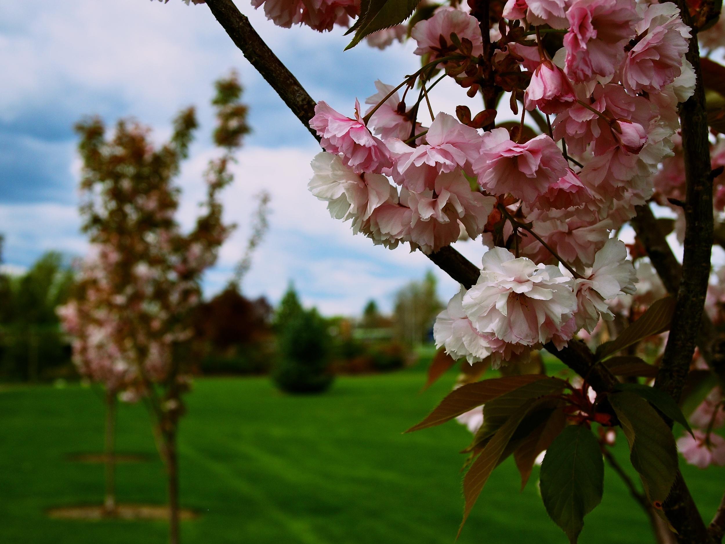 Bloomsday 75.jpg