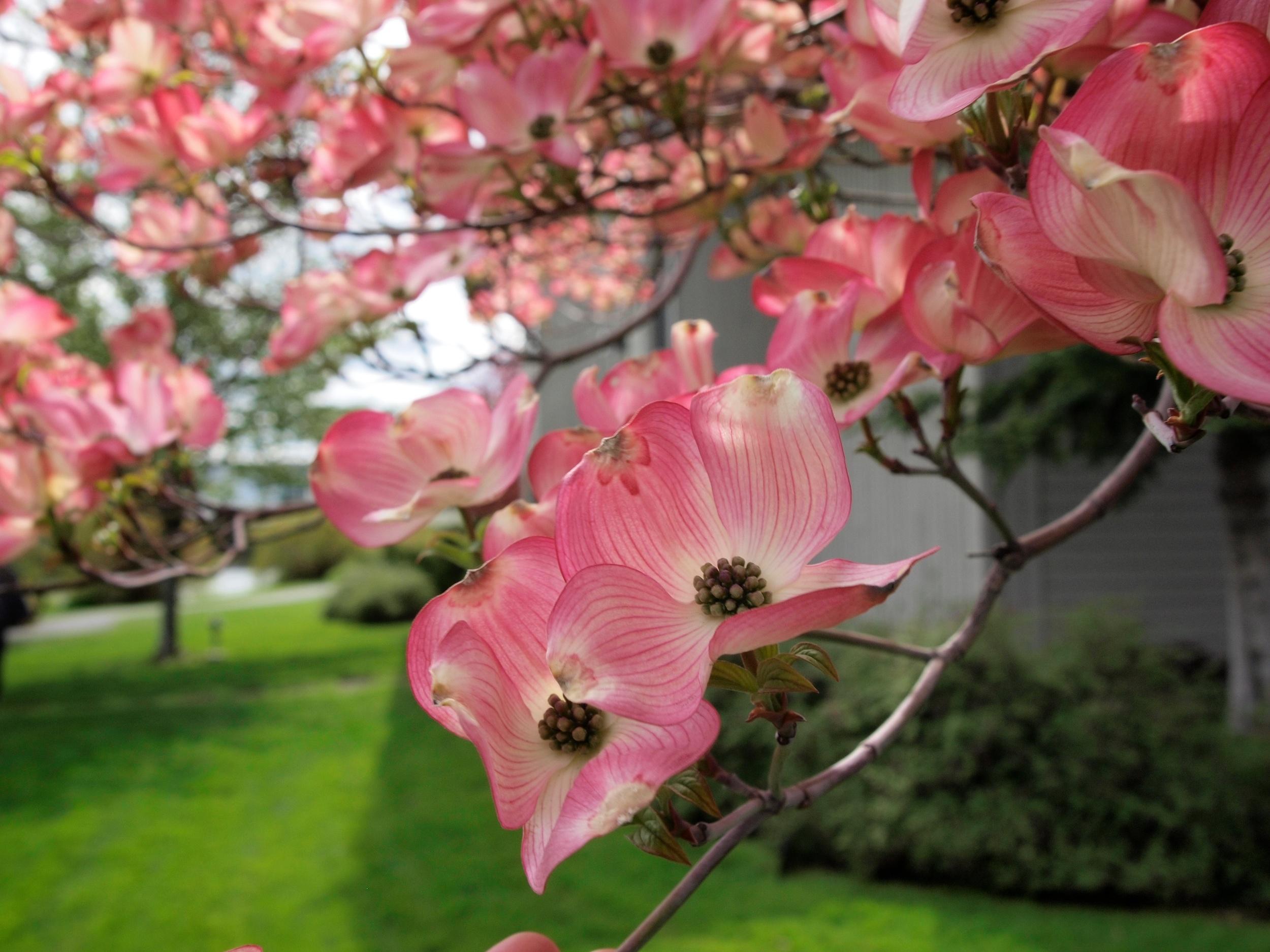 Bloomsday 84.jpg