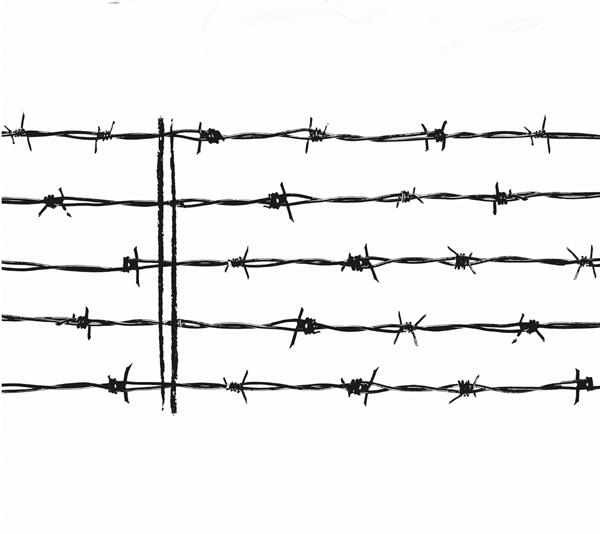 Feldervogel_barbed wire.jpg