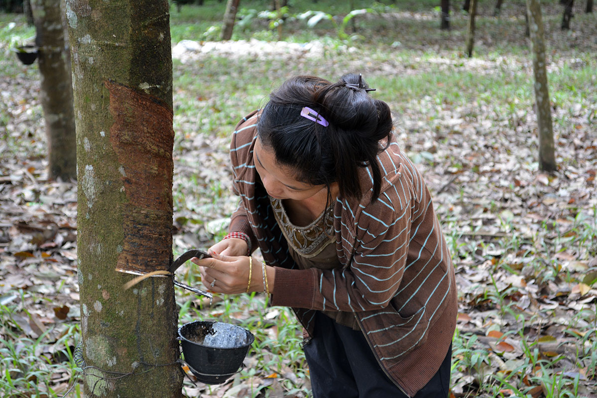 A woman working in a rubber plantation in Fung Na.