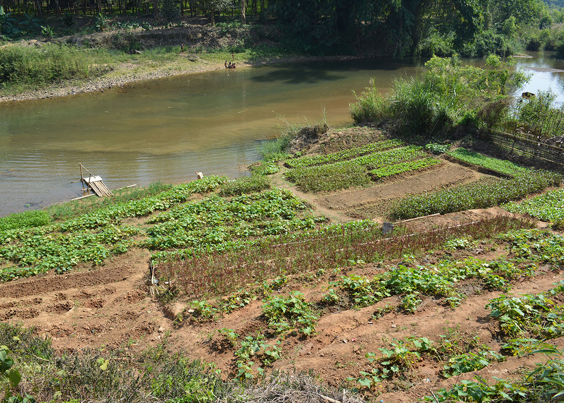 The hardworking family also owns a nice vegetable garden.