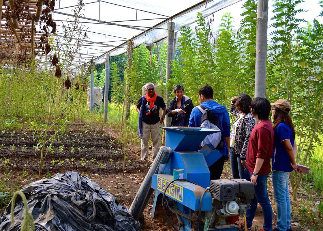 A greenhouse at Baan Dada.