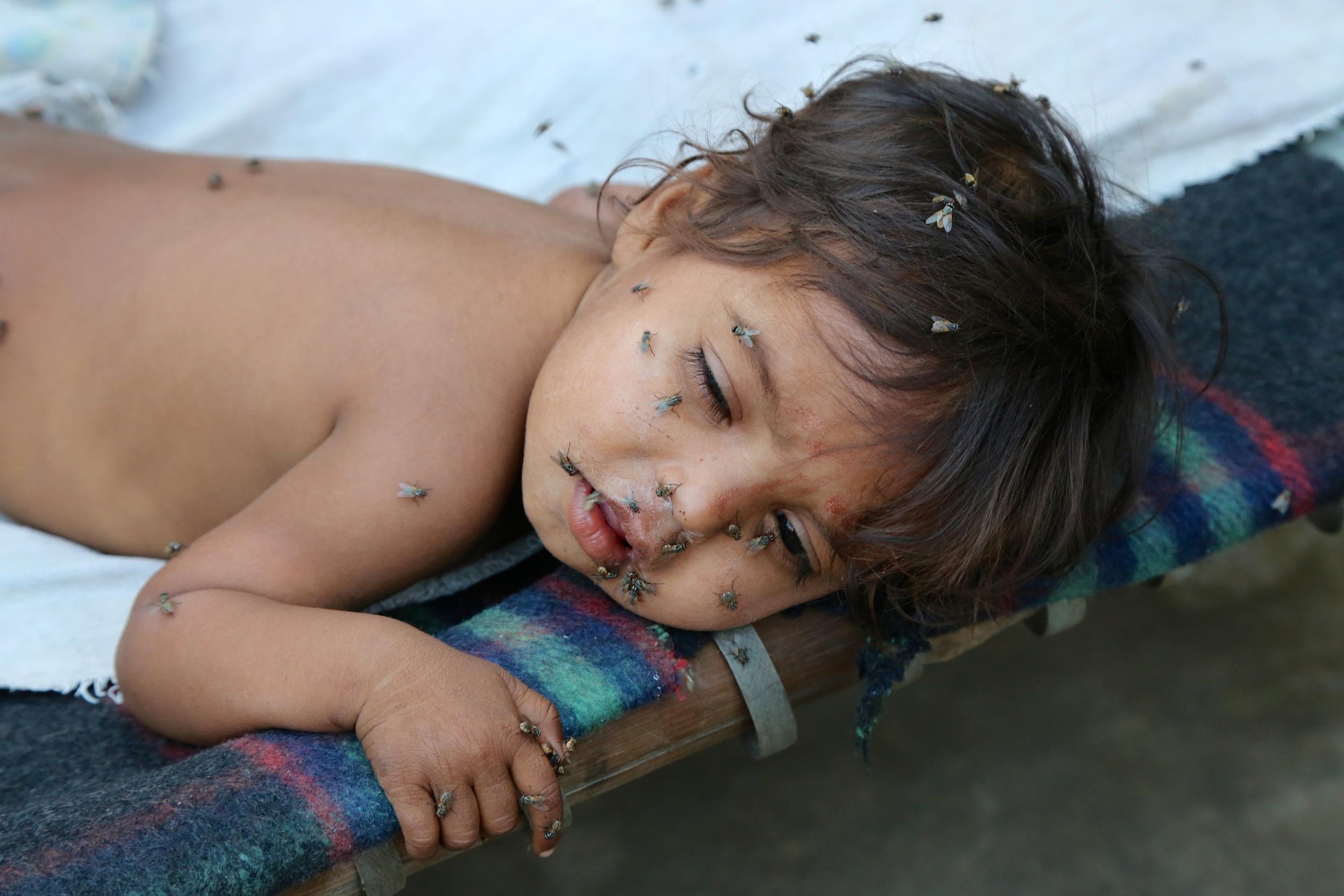 Baby Flies Daulati.jpg
