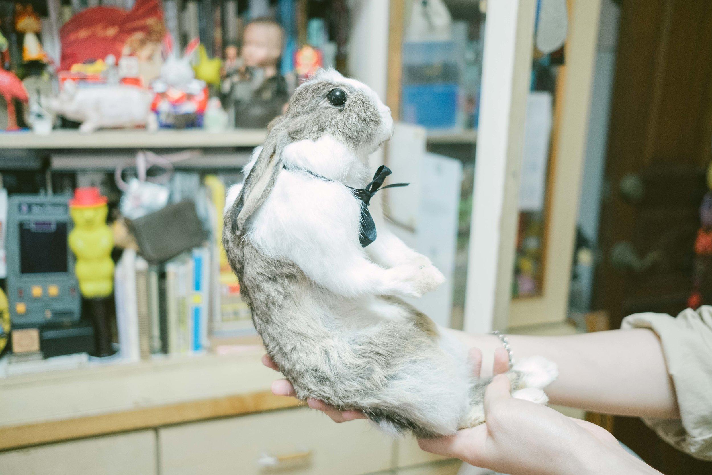 Hazen製的兔子標本也塞在沒有界限的櫃裡