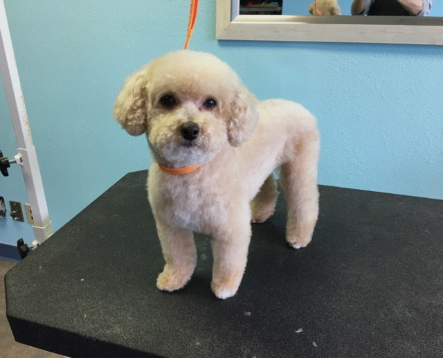 Teddy's after groom photo